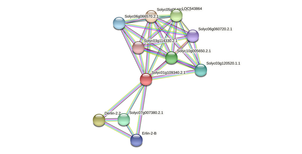 101262966 protein (Solanum lycopersicum) - STRING interaction network