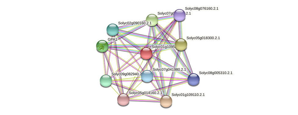 Solyc01g109560.2.1 protein (Solanum lycopersicum) - STRING interaction network