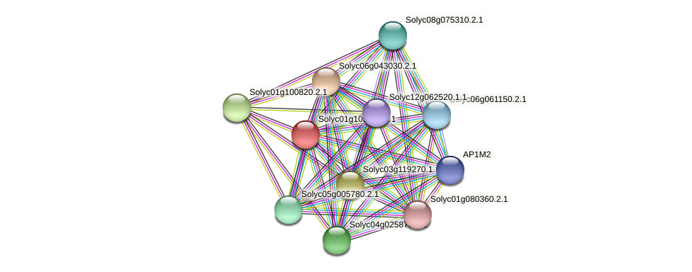 101266464 protein (Solanum lycopersicum) - STRING interaction network