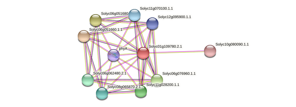 Solyc01g109780.2.1 protein (Solanum lycopersicum) - STRING interaction network