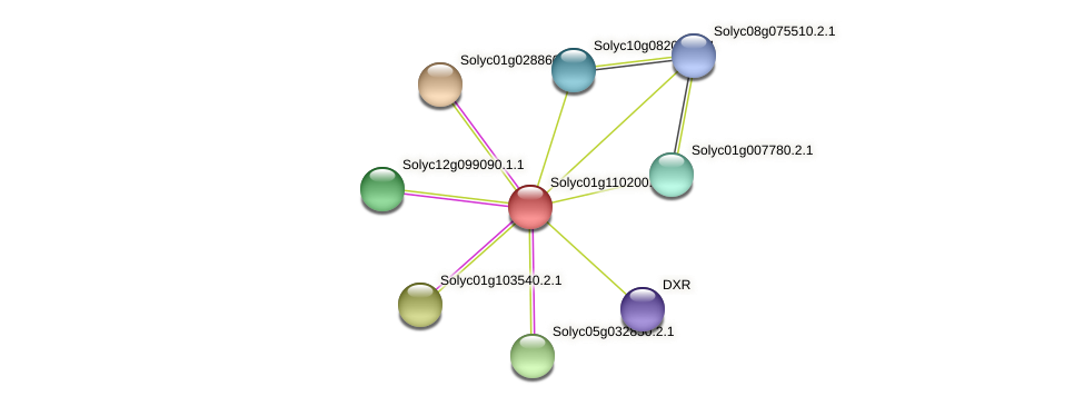 Solyc01g110200.1.1 protein (Solanum lycopersicum) - STRING interaction network