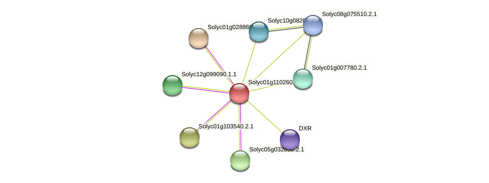 Solyc01g110260.1.1 protein (Solanum lycopersicum) - STRING interaction network
