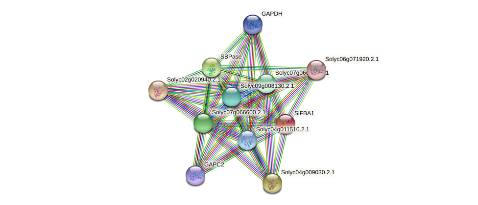 Solyc01g110360.2.1 protein (Solanum lycopersicum) - STRING interaction network