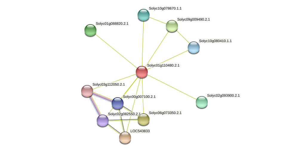101250636 protein (Solanum lycopersicum) - STRING interaction network