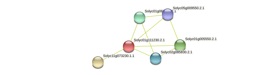 Solyc01g111230.2.1 protein (Solanum lycopersicum) - STRING interaction network