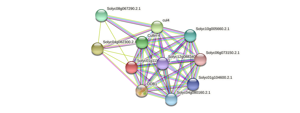 Solyc01g111860.2.1 protein (Solanum lycopersicum) - STRING interaction network