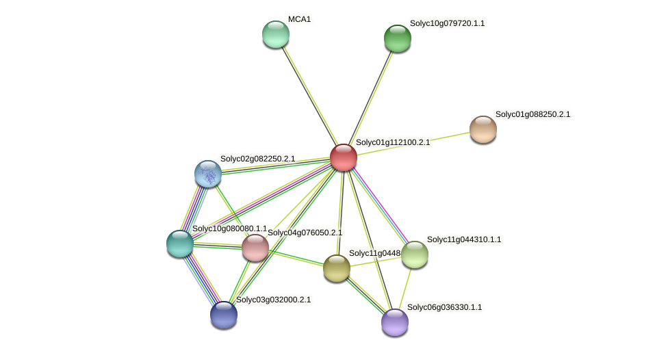 Solyc01g112100.2.1 protein (Solanum lycopersicum) - STRING interaction network