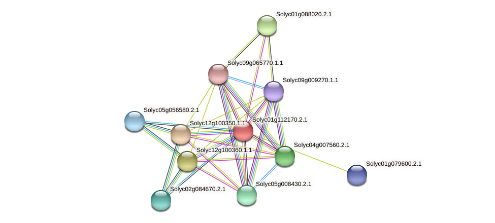 Solyc01g112170.2.1 protein (Solanum lycopersicum) - STRING interaction network