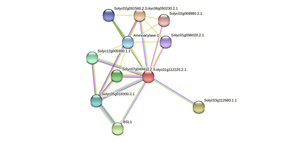 Solyc01g112220.2.1 protein (Solanum lycopersicum) - STRING interaction network