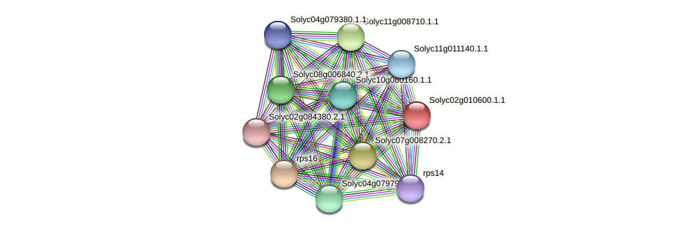 Solyc02g010600.1.1 protein (Solanum lycopersicum) - STRING interaction network