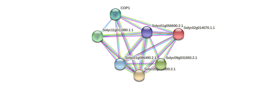Solyc02g014070.1.1 protein (Solanum lycopersicum) - STRING interaction network