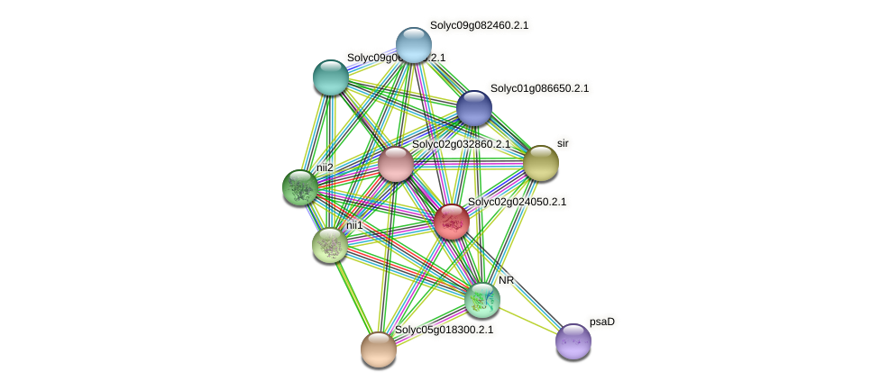 Solyc02g024050.2.1 protein (Solanum lycopersicum) - STRING interaction network