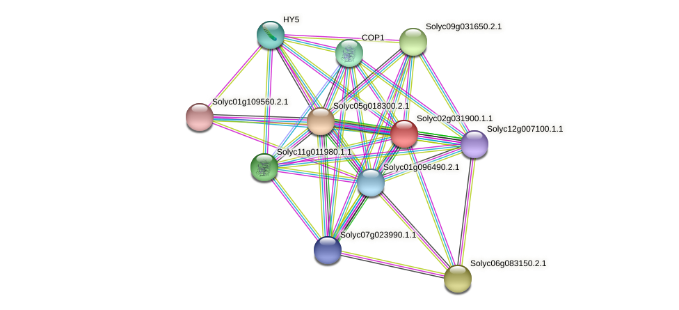 Solyc02g031900.1.1 protein (Solanum lycopersicum) - STRING interaction network