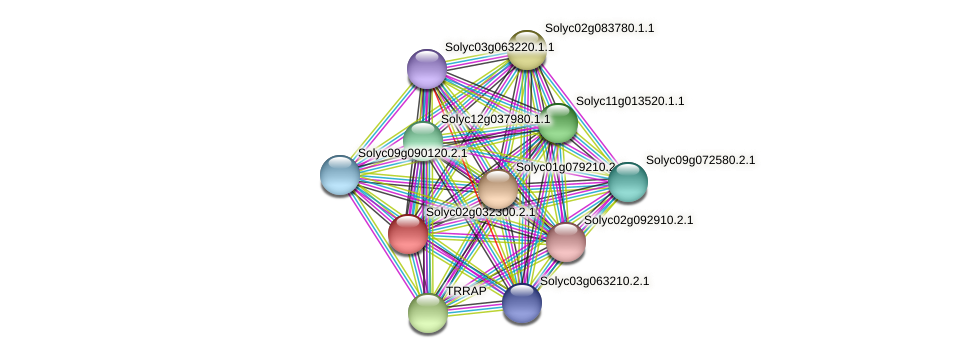 101253542 protein (Solanum lycopersicum) - STRING interaction network
