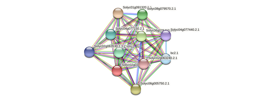 Solyc02g032330.2.1 protein (Solanum lycopersicum) - STRING interaction network