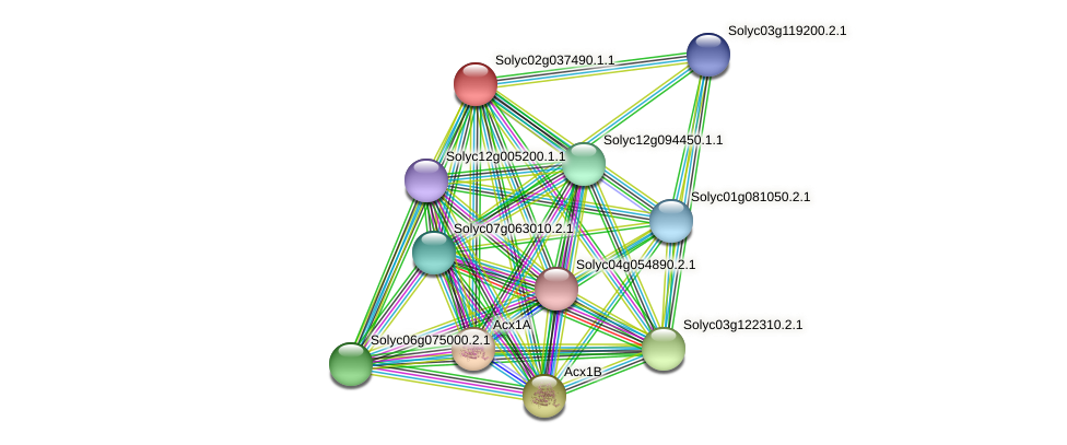 Solyc02g037490.1.1 protein (Solanum lycopersicum) - STRING interaction network