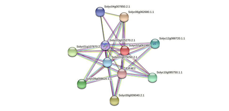 Solyc02g061980.2.1 protein (Solanum lycopersicum) - STRING interaction network