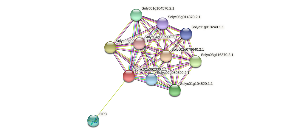 Solyc02g062330.1.1 protein (Solanum lycopersicum) - STRING interaction network