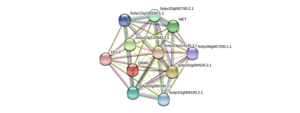 DRM5 protein (Solanum lycopersicum) - STRING interaction network