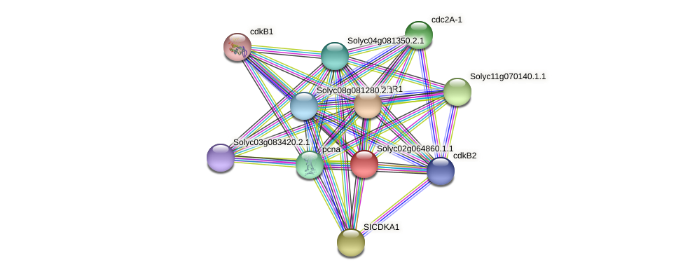 Solyc02g064860.1.1 protein (Solanum lycopersicum) - STRING interaction network