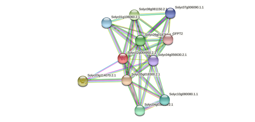 Solyc02g064950.2.1 protein (Solanum lycopersicum) - STRING interaction network