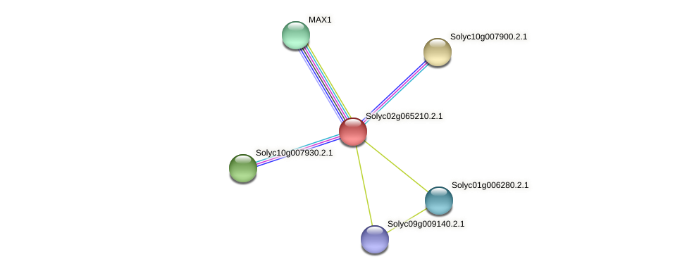 Solyc02g065210.2.1 protein (Solanum lycopersicum) - STRING interaction network