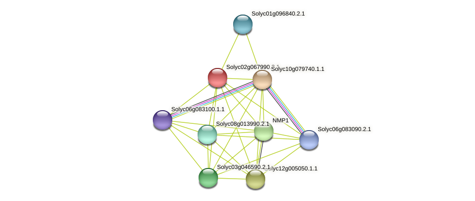 Solyc02g067990.2.1 protein (Solanum lycopersicum) - STRING interaction network