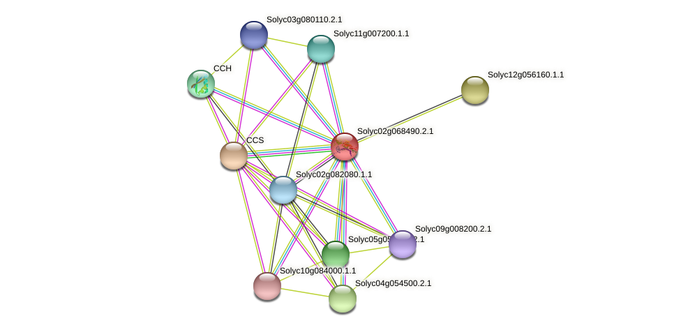 Solyc02g068490.2.1 protein (Solanum lycopersicum) - STRING interaction network