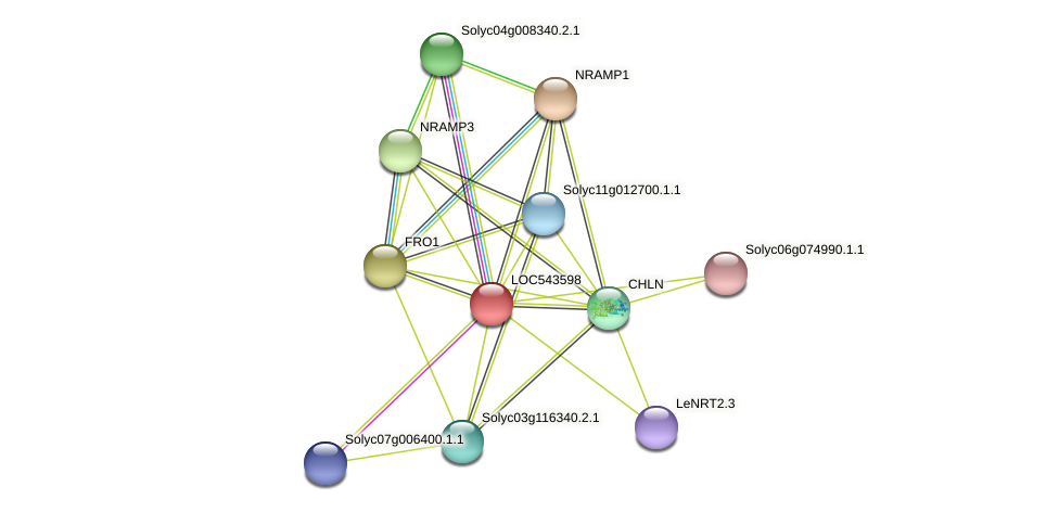 LOC543598 protein (Solanum lycopersicum) - STRING interaction network