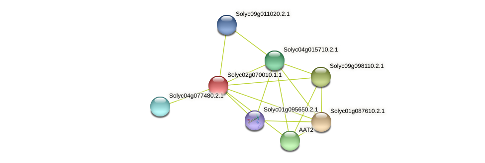 Solyc02g070010.1.1 protein (Solanum lycopersicum) - STRING interaction network