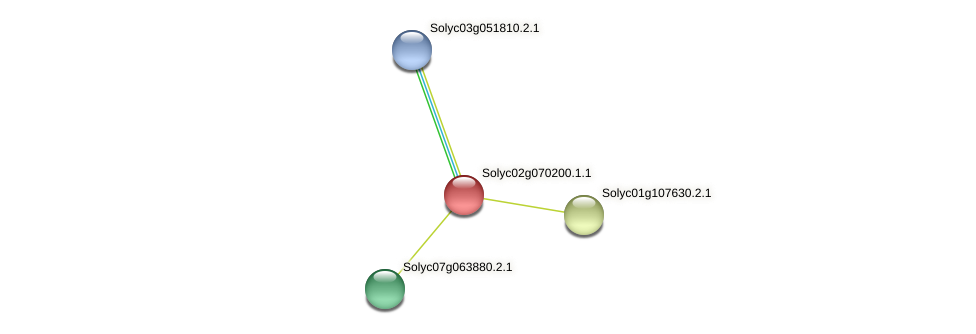101263376 protein (Solanum lycopersicum) - STRING interaction network