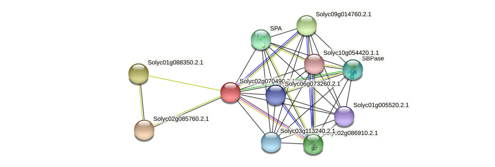Solyc02g070490.2.1 protein (Solanum lycopersicum) - STRING interaction network