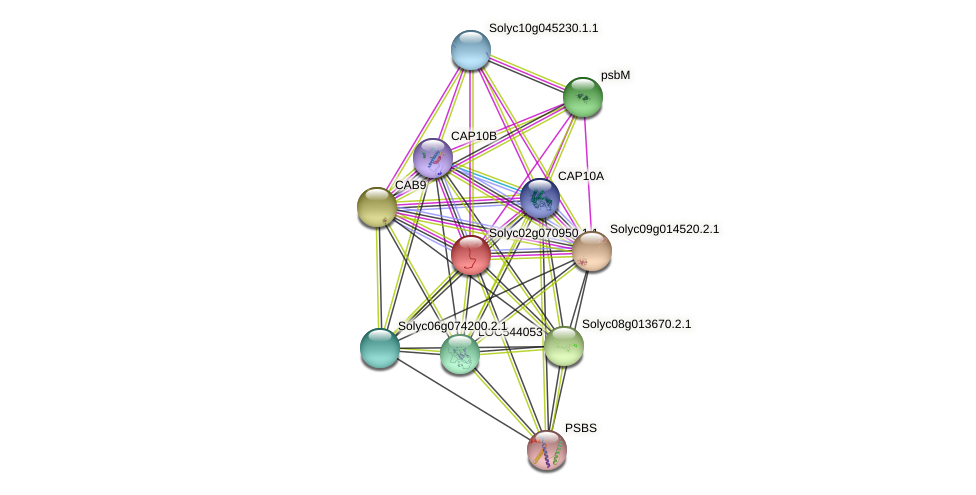 Solyc02g070950.1.1 protein (Solanum lycopersicum) - STRING interaction network
