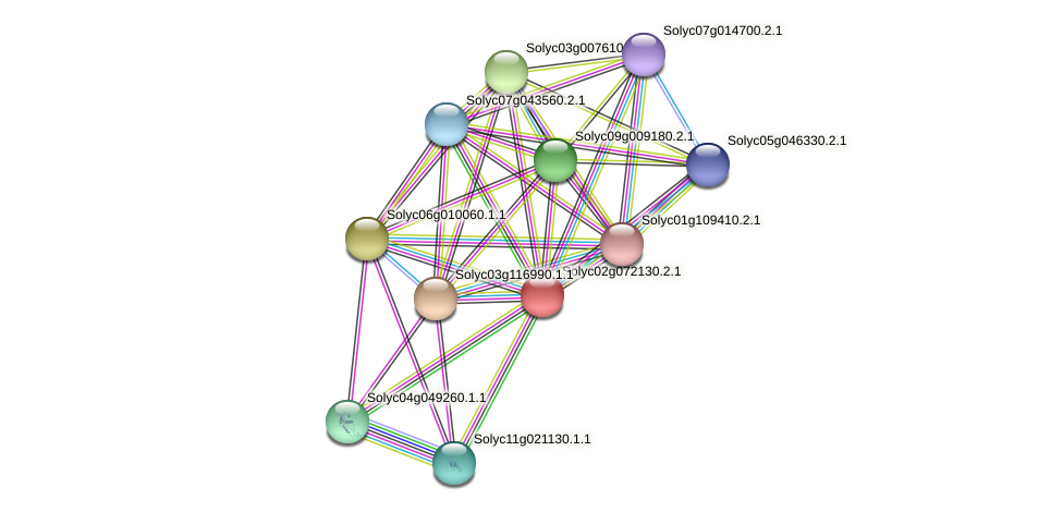 Solyc02g072130.2.1 protein (Solanum lycopersicum) - STRING interaction network