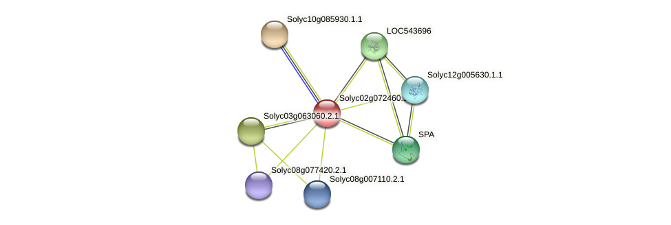 Solyc02g072460.1.1 protein (Solanum lycopersicum) - STRING interaction network