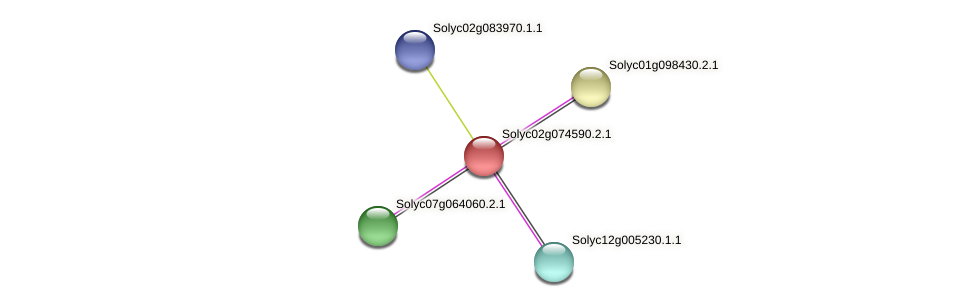 Solyc02g074590.2.1 protein (Solanum lycopersicum) - STRING interaction network