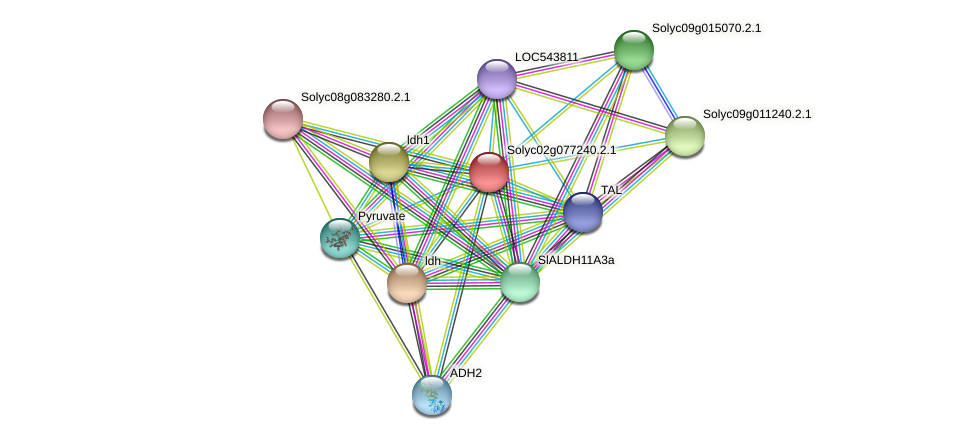 Solyc02g077240.2.1 protein (Solanum lycopersicum) - STRING interaction network