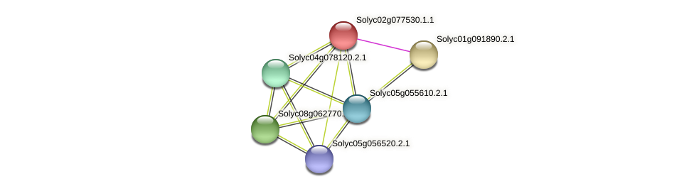 Solyc02g077530.1.1 protein (Solanum lycopersicum) - STRING interaction network