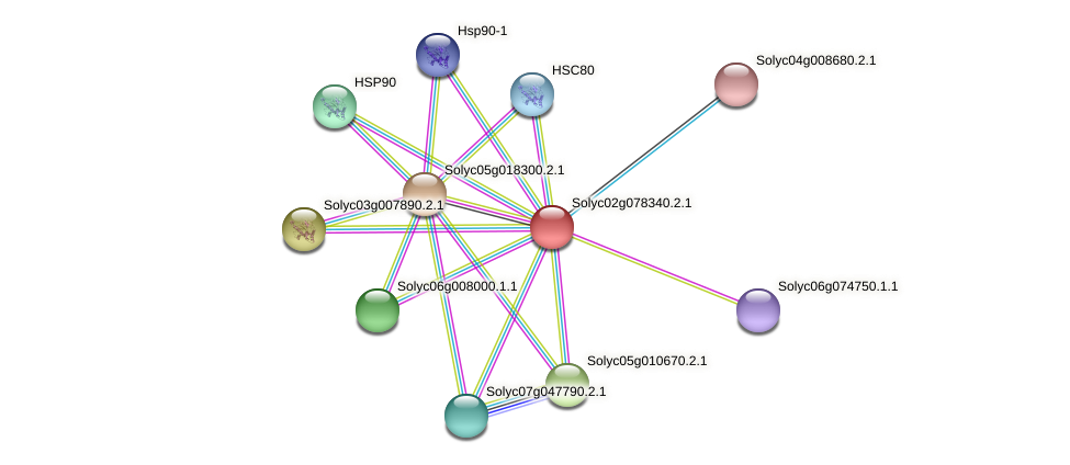 Solyc02g078340.2.1 protein (Solanum lycopersicum) - STRING interaction network