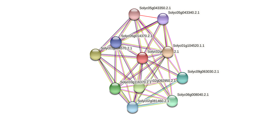 Solyc02g078640.2.1 protein (Solanum lycopersicum) - STRING interaction network