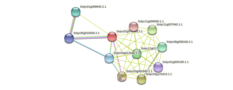 Solyc02g079590.2.1 protein (Solanum lycopersicum) - STRING interaction network