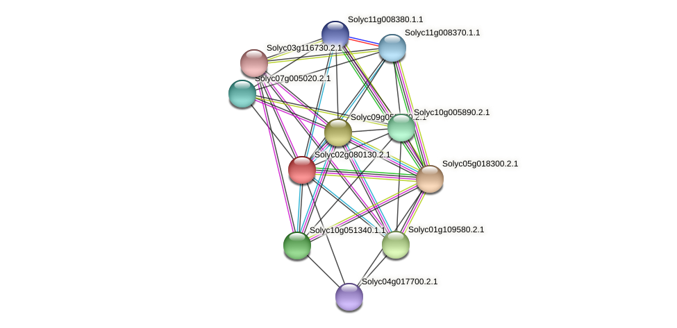 Solyc02g080130.2.1 protein (Solanum lycopersicum) - STRING interaction network