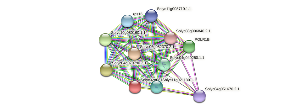 Solyc02g081660.2.1 protein (Solanum lycopersicum) - STRING interaction network