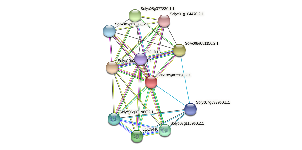Solyc02g082190.2.1 protein (Solanum lycopersicum) - STRING interaction network