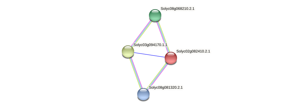 Solyc02g082410.2.1 protein (Solanum lycopersicum) - STRING interaction network