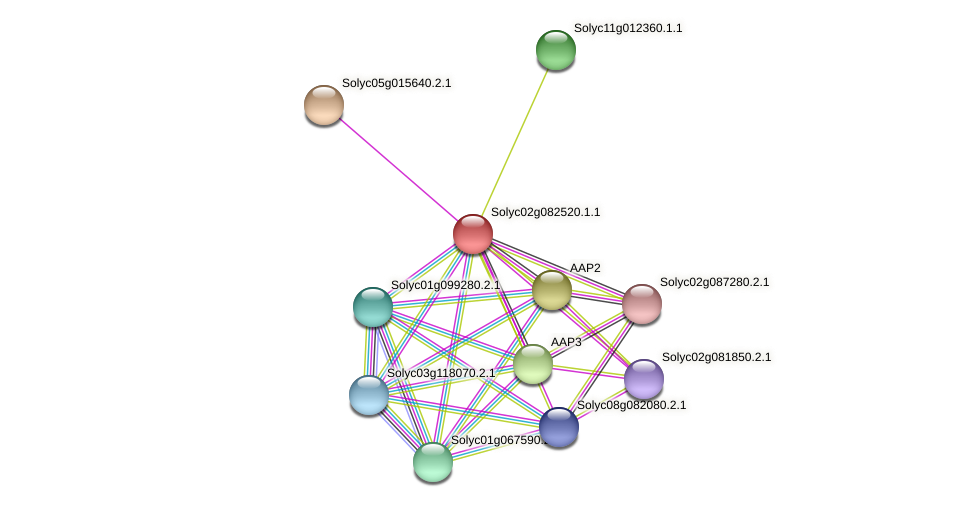 Solyc02g082520.1.1 protein (Solanum lycopersicum) - STRING interaction network