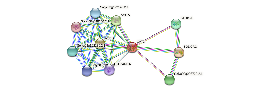 Solyc02g082760.2.1 protein (Solanum lycopersicum) - STRING interaction network
