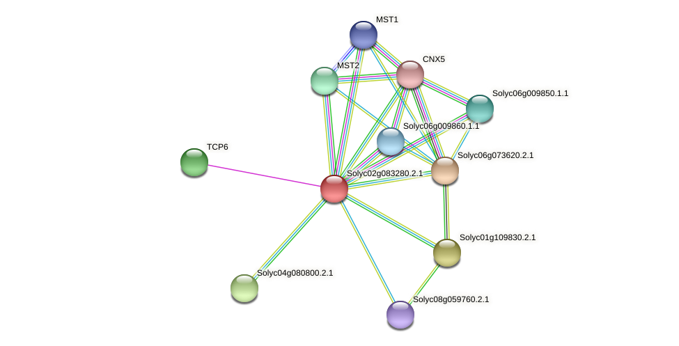 101247880 protein (Solanum lycopersicum) - STRING interaction network