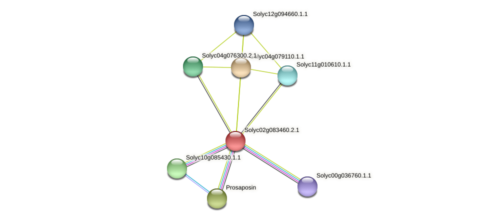 Solyc02g083460.2.1 protein (Solanum lycopersicum) - STRING interaction network