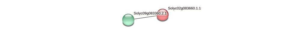 Solyc02g083660.1.1 protein (Solanum lycopersicum) - STRING interaction network